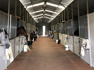 Happy Horses at the Queanbeyan Racing Club Using Our Specifically Formulated Insulation